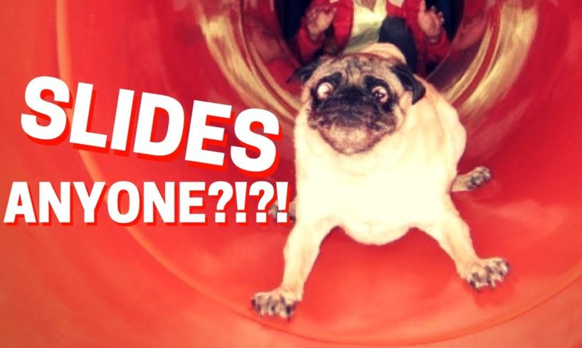 🔴 Animals on Slides Fail - Funny Animals Playing on Slides Compilation NEW