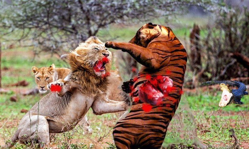 10 BRUTAL Animal Fights Caught on Camera