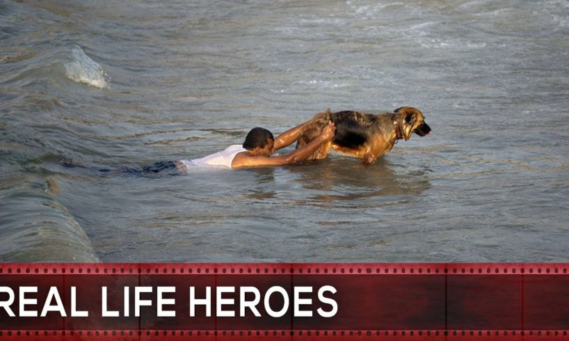 17 Most Inspiring Animal Rescues by Real Life Heroes #17