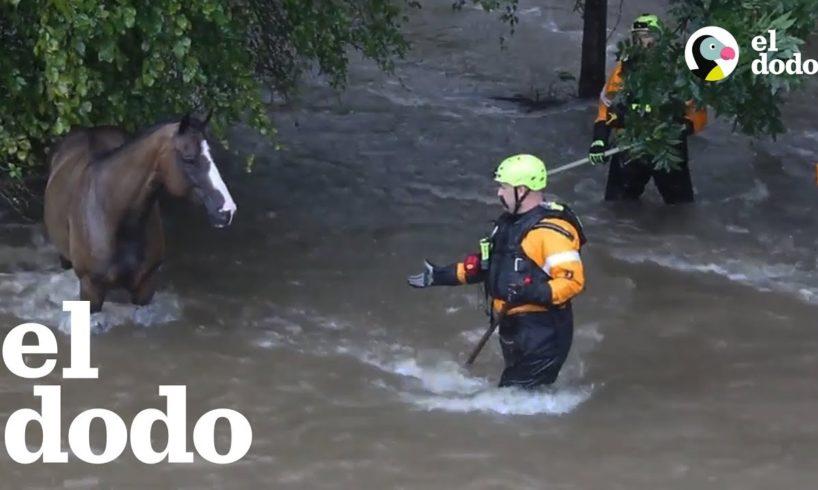 3 rescates de animales impresionantes