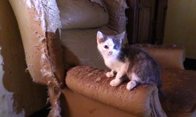 40+ Cats/Kittens Rescued from Hoarding House