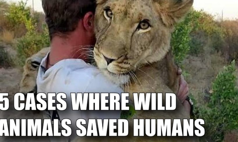 5 CASES WHERE WILD ANIMALS SAVED HUMANS