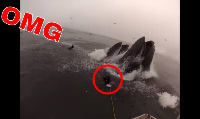 ALMOST swallowed by WHALE 😱😱NEAR DEATH EXPERIENCE CAPTURED by GoPro compilation