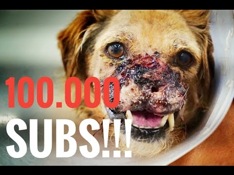 AMAZING! EXTREME ANIMAL RESCUE HITS 100.000 SUBS  +  CRISIS AT THE HOSPITAL