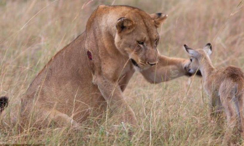 Amazing!! Animal Saves Another Animal | Animal Heroes 2016 HD