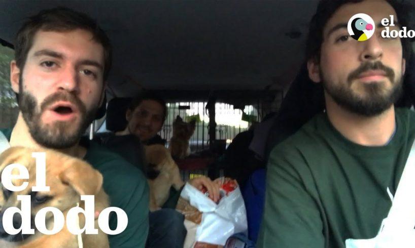 Amigos viajan más de 20 horas para ayudar a perros rescatados
