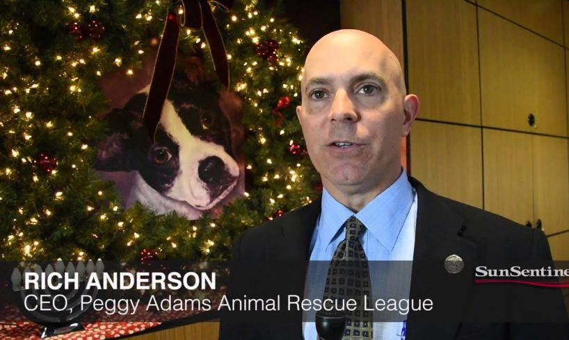 Animal Rescue Group To Deliver Dogs, Cats On Christmas