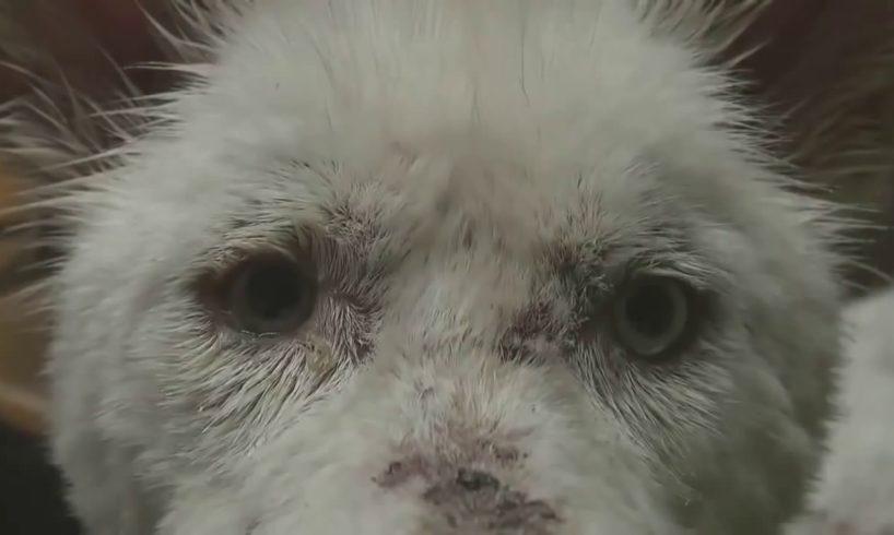Animal Rescue - hopeforpaws - ( 2611nacdan )