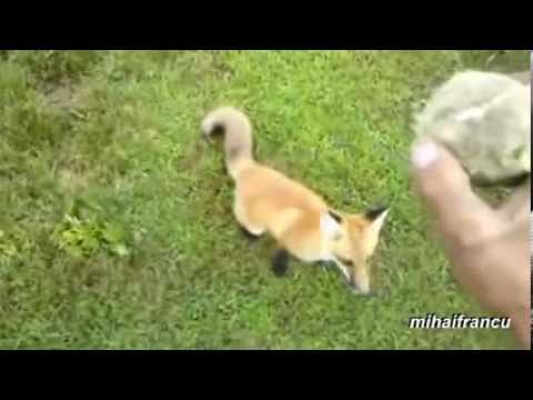 Animals Playing Fetch Compilation