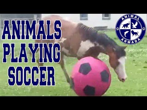 Animals Playing Soccer (Football, Futbol) Compilation - animal football skills