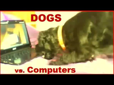 Animals Playing on iPads Compilation 2014 - pt 2 DOGS