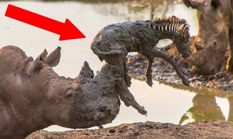 Animals SAVING Other Animals!