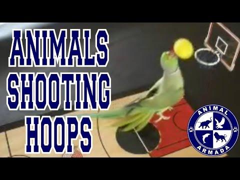 Animals Shooting Hoops - Animal Basketball Skills Compilation