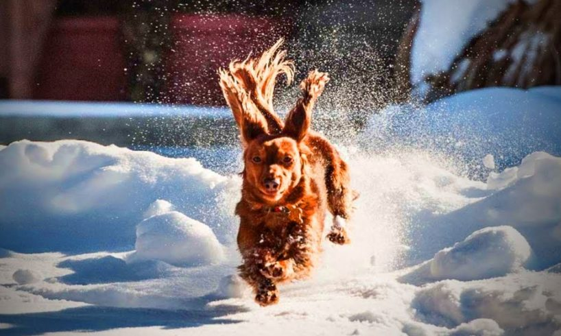 Animals and Snow❄ 🐶Cute Animals Playing with Snow(Full) [Funny Pets]