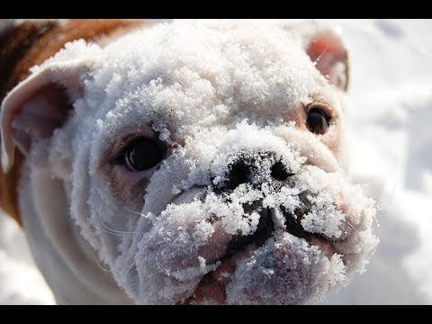 Animals and Snow ❄🐶 Cute Animals Playing with Snow (Part 1) [Funny Pets]
