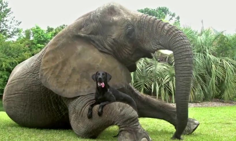 Animals playing with other animals