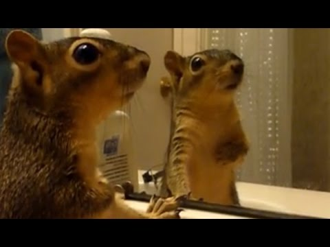Animals react to their reflections - Funny animals vs mirrors compilation