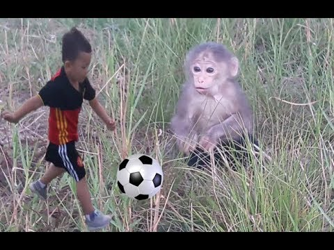 Baby Monkey | Doo Play Outdoor - Funny Animals - Funny Animals
