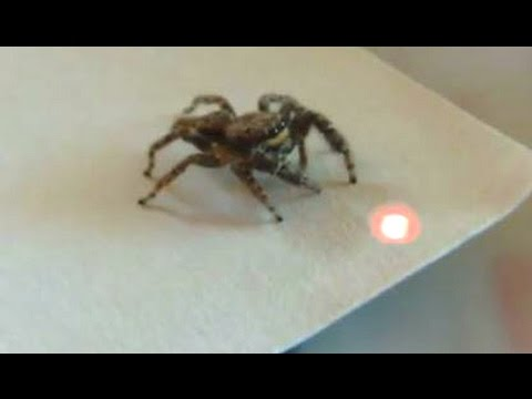 Best Funny Videos Of Animals Chasing Lasers Compilation 2014