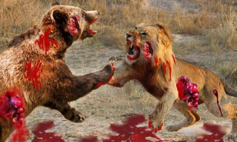 Biggest wild animal fights - Musical EPIC HD