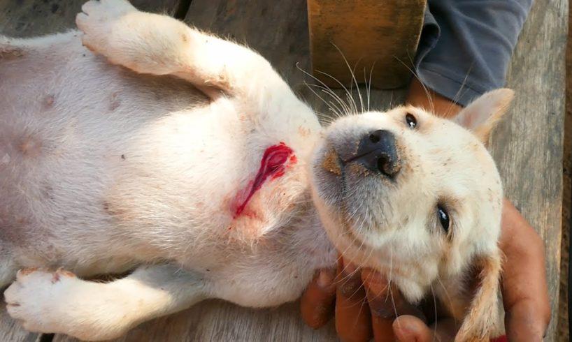 Boy Rescues Baby Puppy was bitten by Big Dog