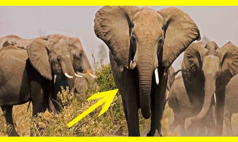 CRAZIEST Animal Fights Caught On Camera || Lion VS Biggest Elephants Fight