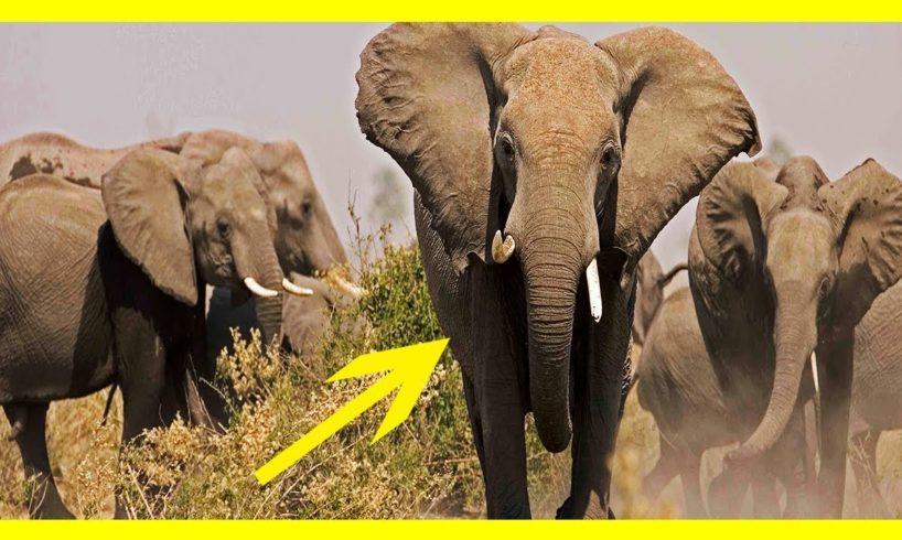 CRAZIEST Animal Fights Caught On Camera || Lion VS Biggest Elephants Fight