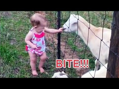 CUTE ANIMALS and BABIES Playing together Compilation - Adorable pets and baby videos!