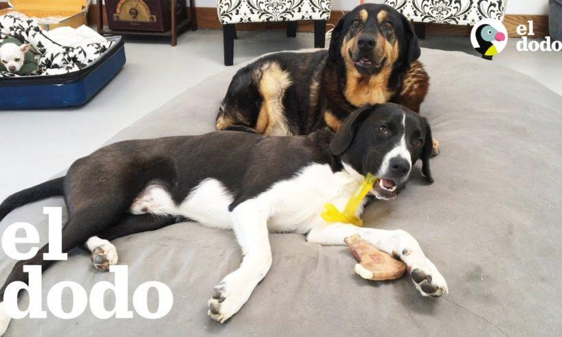 Cachorro trae caos a una casa para perros ancianos