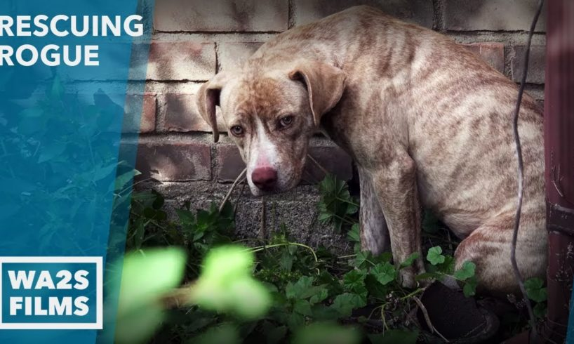 Caught On Camera - Dog Neglected for Weeks by Animal Control Rescued - Hope For Dogs Like My DoDo