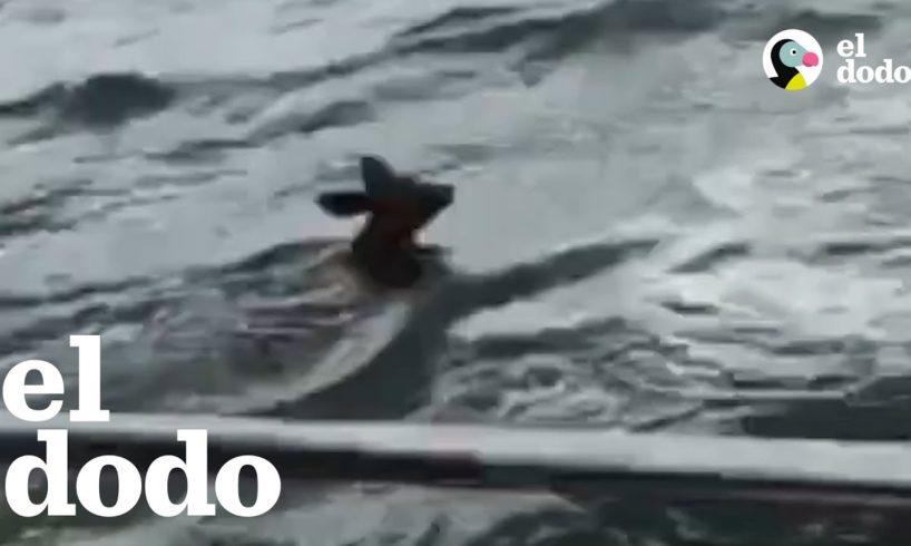 Cervato se estaba ahogando durante una tormenta y personas valientes lo rescataron