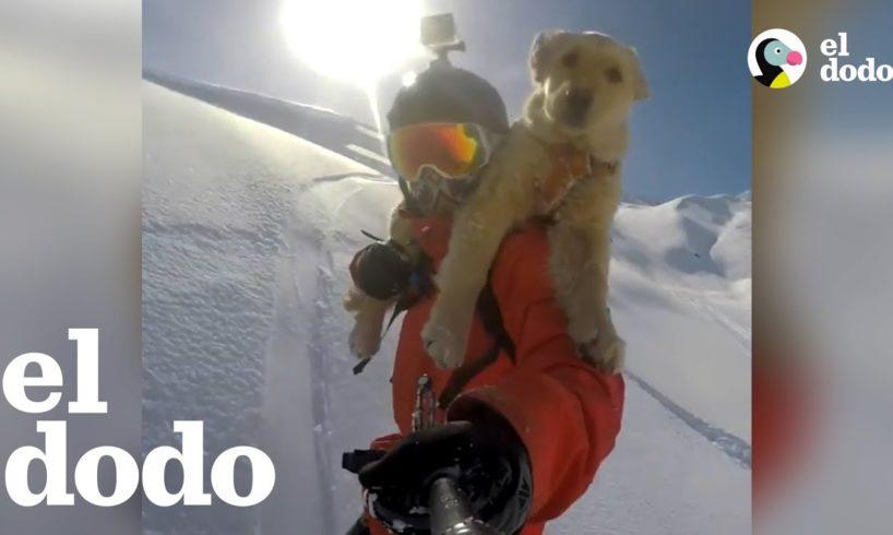 Chico perdió a su perro en un accidente, ahora recibe la mejor sorpresa