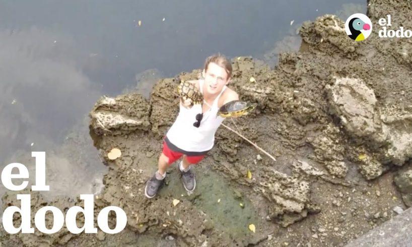 Chicos salvan tortugas encadenadas que casi se ahogan