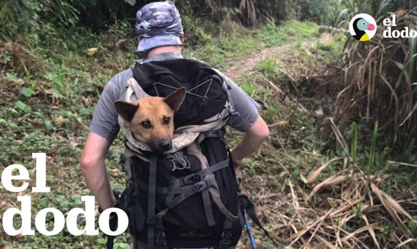 Chicos viajan por horas en una excursión para salvar a un perrito