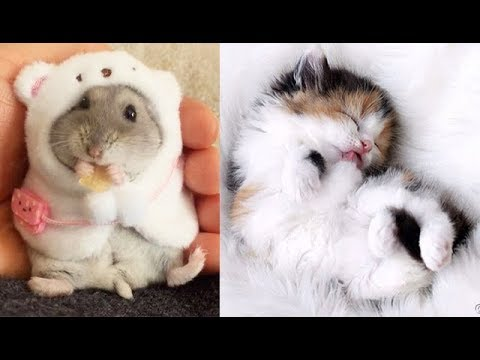 Cute And funny Pet Videos Compilation cute moment of the animals #4 - Cutest Animals 2019