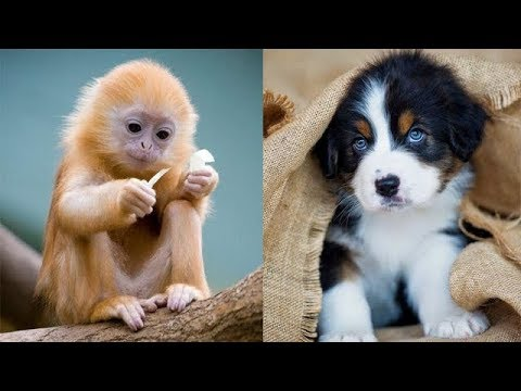 Cutest animals - Puppy clean up the snow - Cute Baby Animals