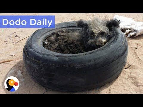 Dog Living in Tire Rescued & ADOPTABLE: Best Animal Videos   The Dodo Daily