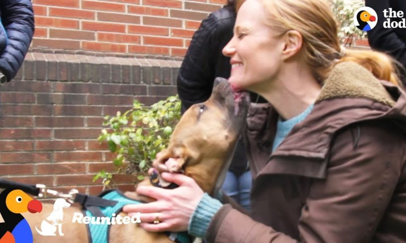 Dog Reunited With Foster Mom For The First Time Since Her Adoption | The Dodo Reunited
