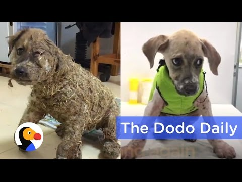 Dog Transformation After Kids Cover Puppy in Glue | Best Animal Videos | The Dodo Daily  Ep 19
