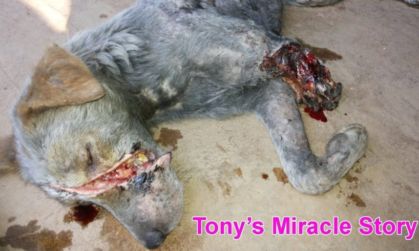 Dog rescued almost dead - watch what happened!