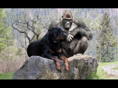 Dogs Friendship with Animals