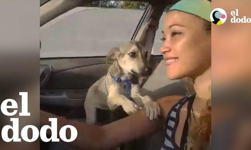 Dos Cachorritas rescatadas de Puerto Rico se reúnen en los EE.UU.