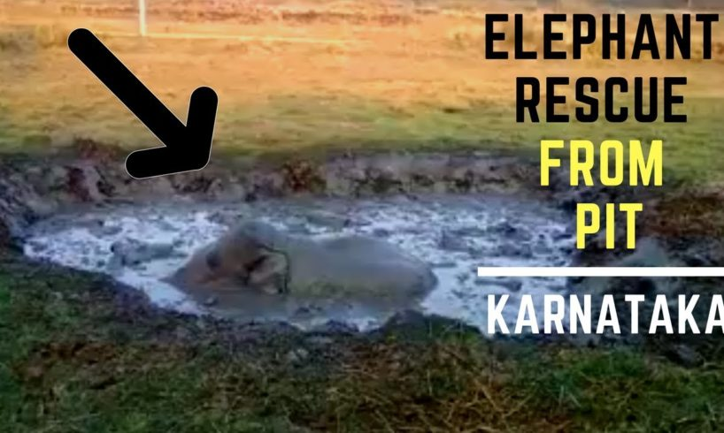 Elephant Rescue from swampy pit | KARNATAKA forest department | Animal Rescue India