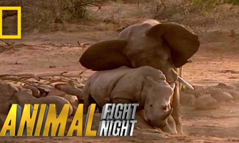 Elephant vs. Rhino | Animal Fight Night