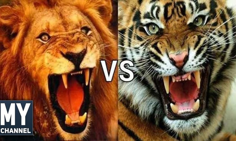 En İnanılmaz 10 Hayvan Kavgası ( Most Amazing 10 Animal Fights )
