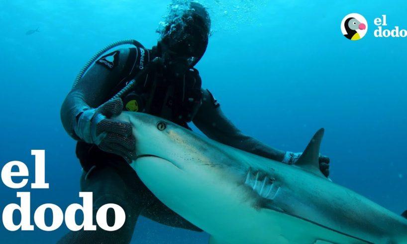 Esta mujer es una encantadora de tiburones