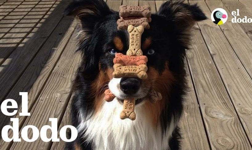 Este es el perro más paciente del mundo
