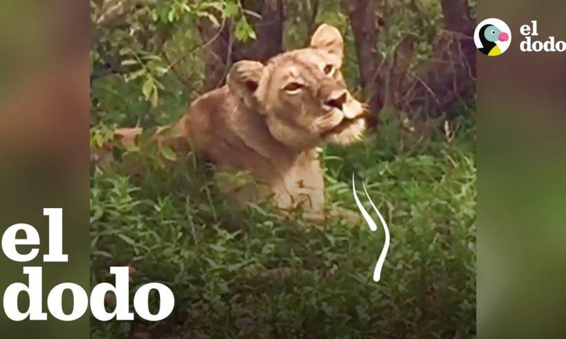 Estos animales vieron a sus familias después de estar separados por mucho tiempo