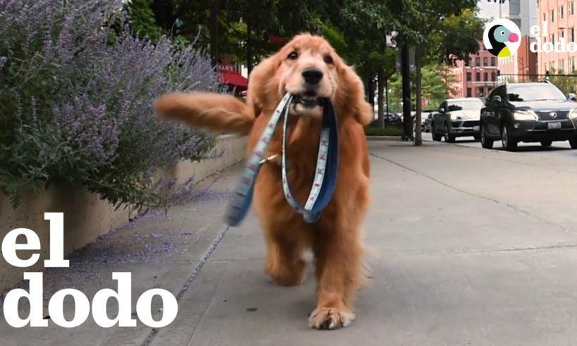 Estos perritos inteligentes son muy independientes