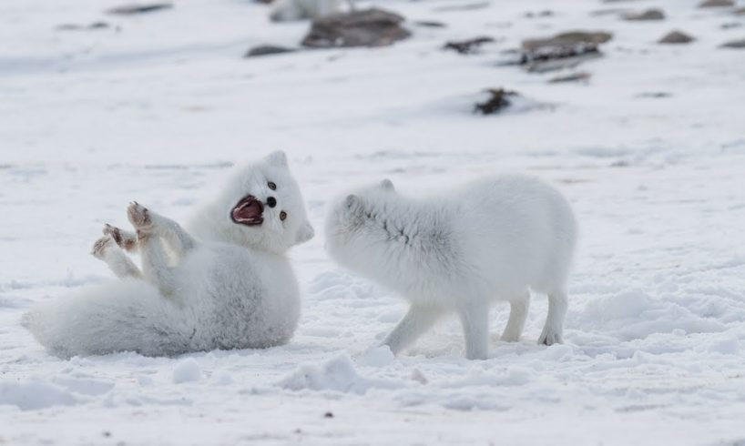 FUNNY Wild Animals Playing in Snow | Top Funny Animals